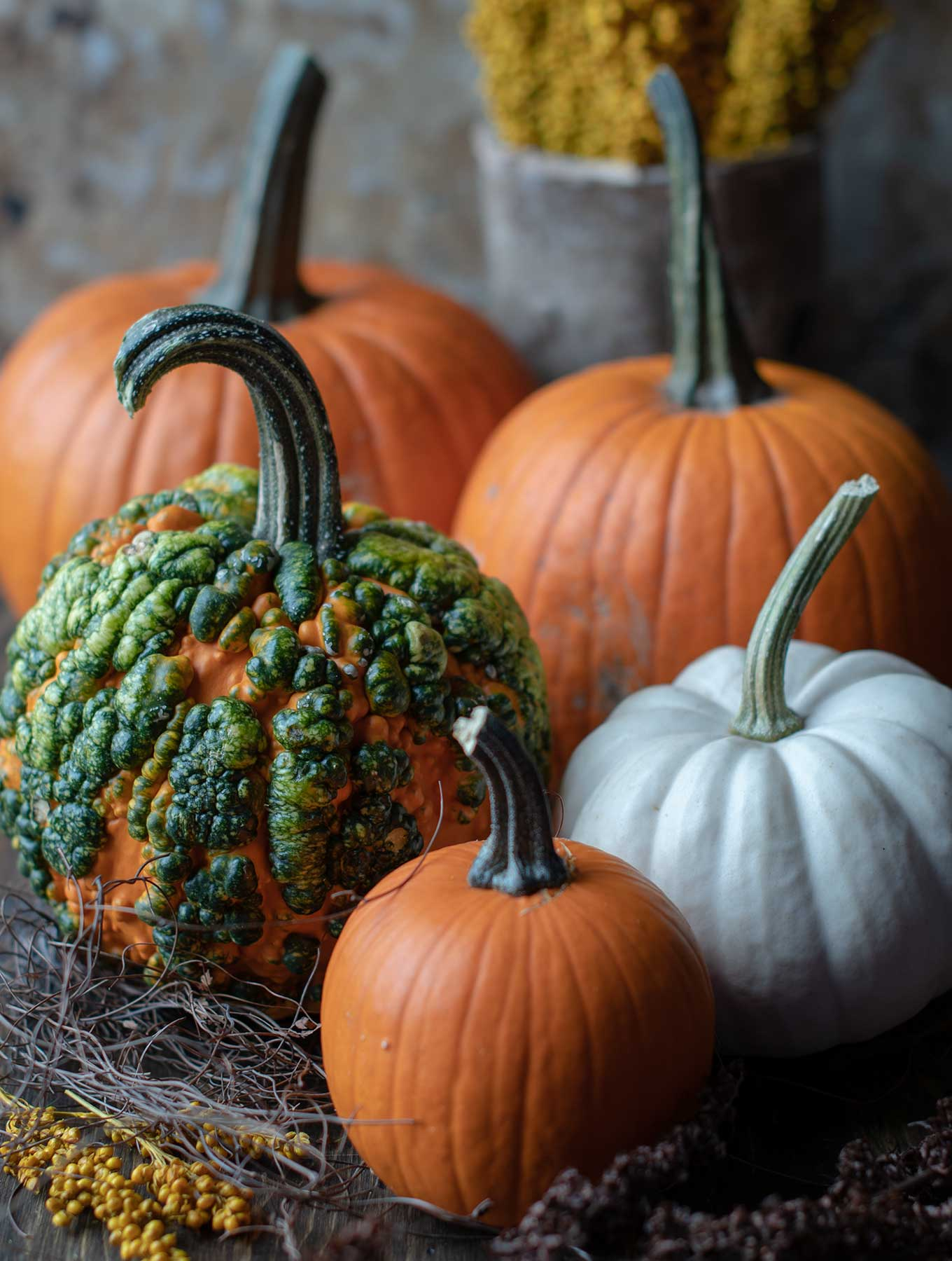 Assortment of fall pumpkins