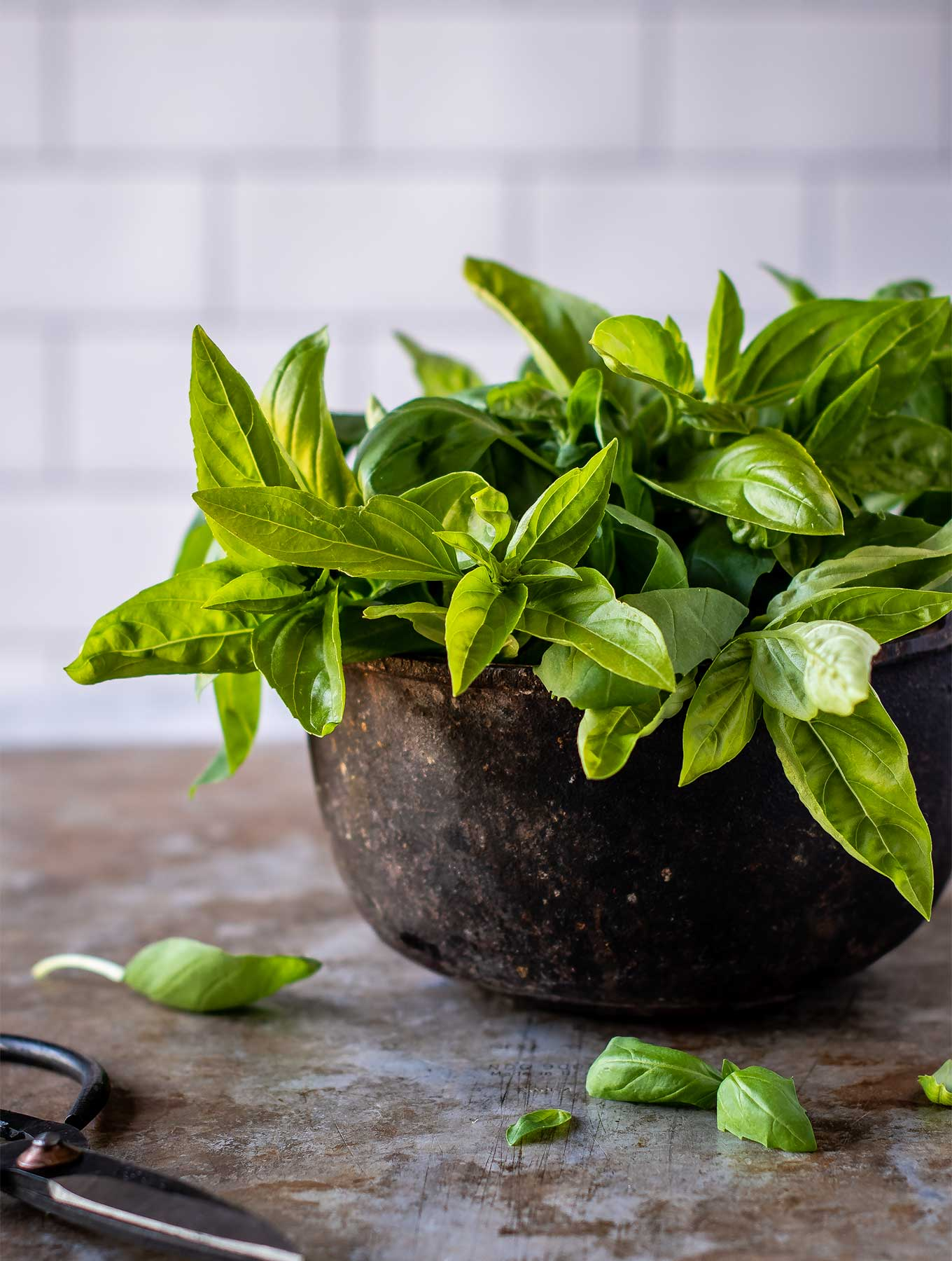 Metal bowl of fresh basil
